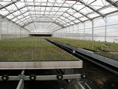 Nexus Greenhouse Systems Palletized Rolling Benches